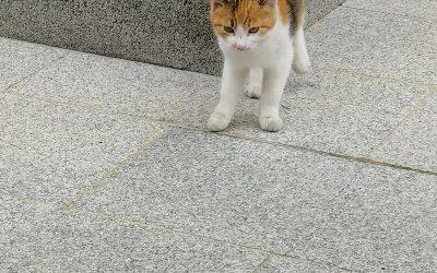 Katze in Gschwandt vermisst