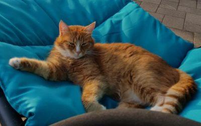 Katze in Weyregg vermisst