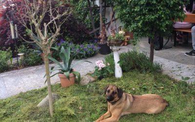 Nala sucht neues Zuhause
