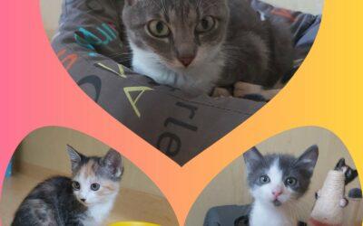 Mama Emma, Emil & Elli