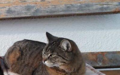 Katze Mimi in Kirchham entlaufen