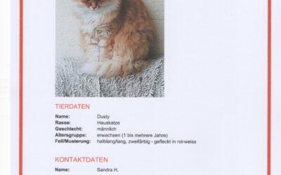 Katze vermisst in Vorchdorf