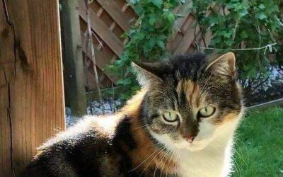 Katze Lucy entlaufen